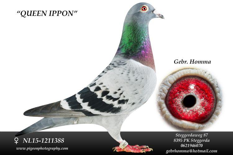 Queen Ippon